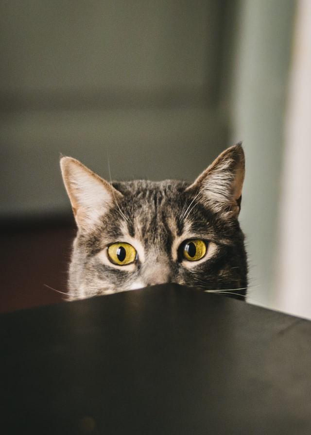 Foto einer Katze, die mit großen, wachsamen Augen über eine Tischecke lugt