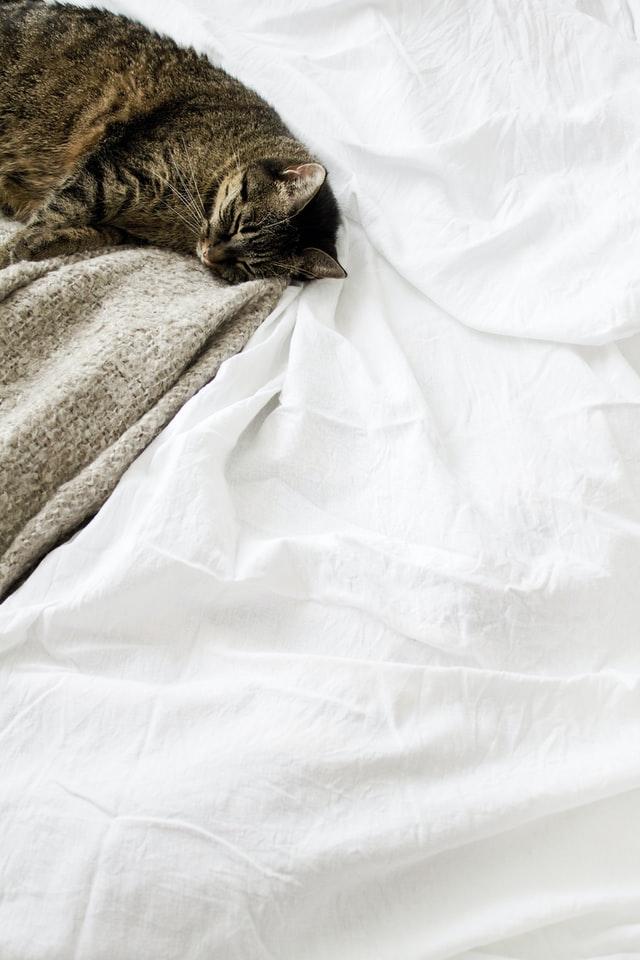 Foto einer Katze, die ganz entspannt auf einem Bett liegt